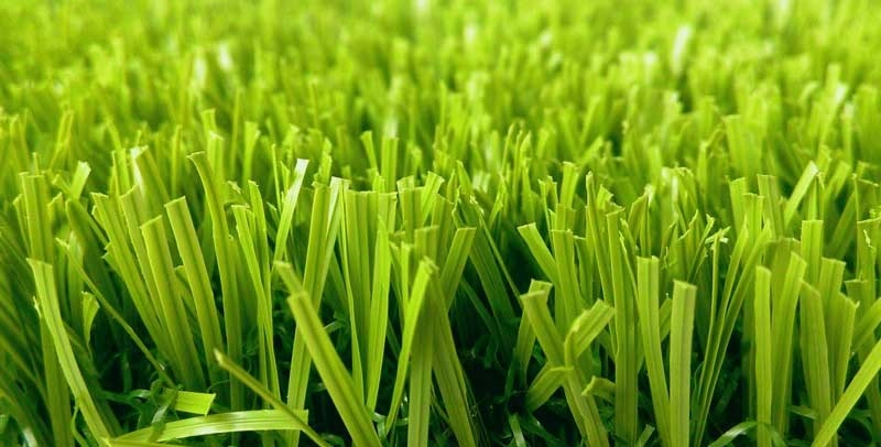 How to Stop Window Reflection From Burning Your Grass